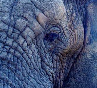 L'analogie de l'éléphant