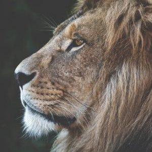 Avoir du charisme : 12 trucs à intégrer pour être plus charismatique
