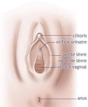 schéma clitoris
